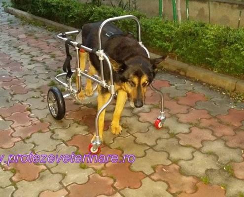 carucior pentru caini paralizati