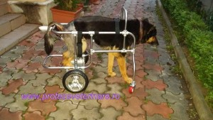protezare veterinara