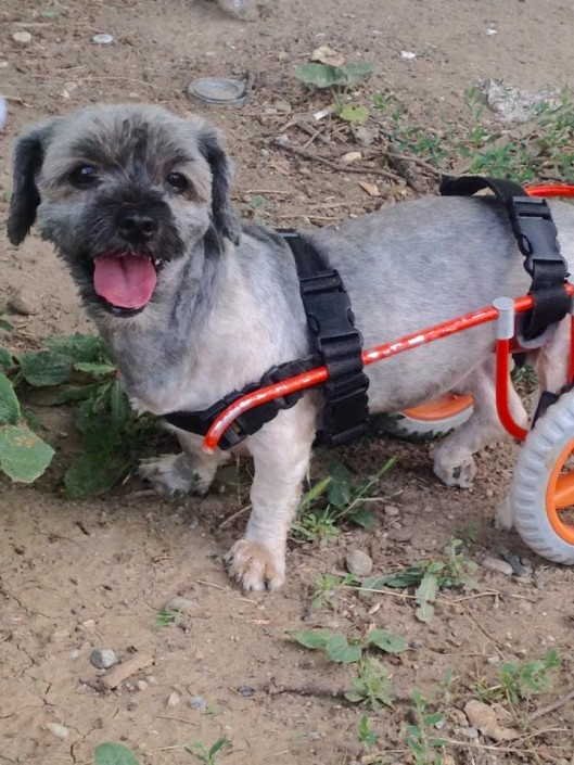wheelchair for dog