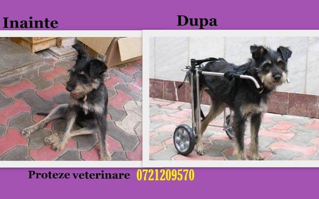 dog wheelchairs