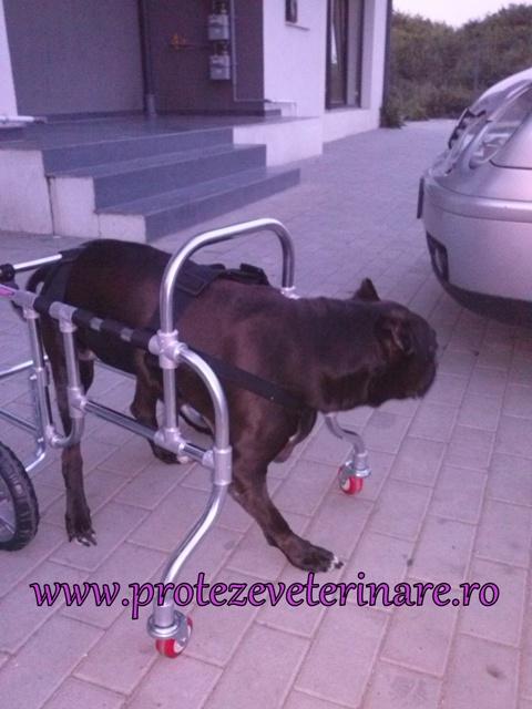 proteza veterinara integrala